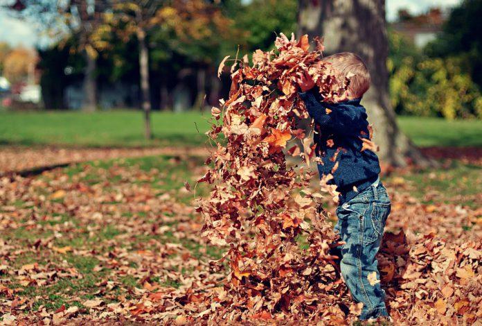 Het is weer tijd voor bladeren
