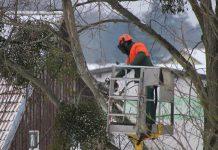 Bomen snoeien in Soesterberg