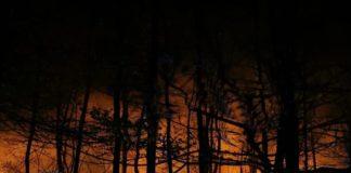 Bron: Brandweer Soesterberg. Grote bosbrand