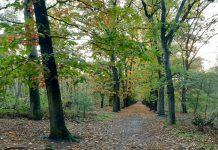 Zeister bos bij Soesterberg